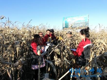 农业农机技术员示范田测产.JPG